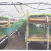 hydroponics pic