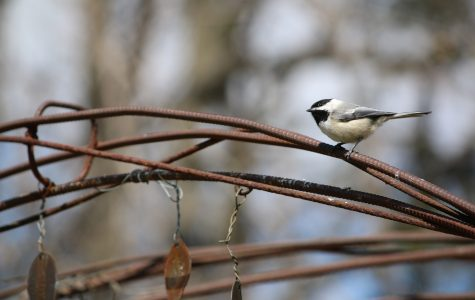 Facilities plea for bird seed