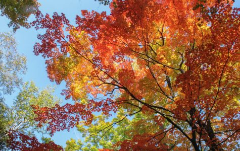 Urban Forestry Commission seeks input through tree survey