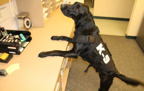 K-9 Officer Boomer wearing the ballistic vest granted to the Whitewater PD.