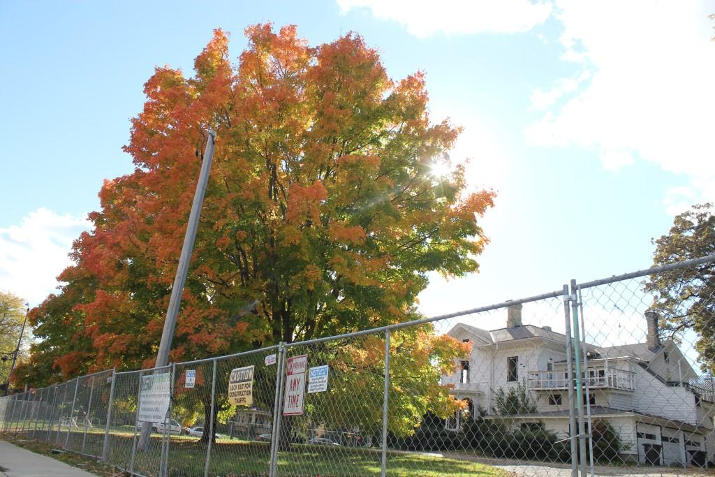 Two maple trees on the property of the old Olsen Funeral Home stand on Oct. 16 before being cut down days later to make way for the Campus Edge Apartments development.