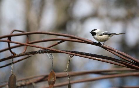 Facilities plea for bird seed