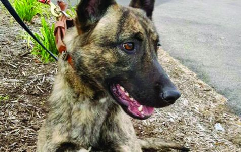 Campus K9 let go, replacement pup coming soon