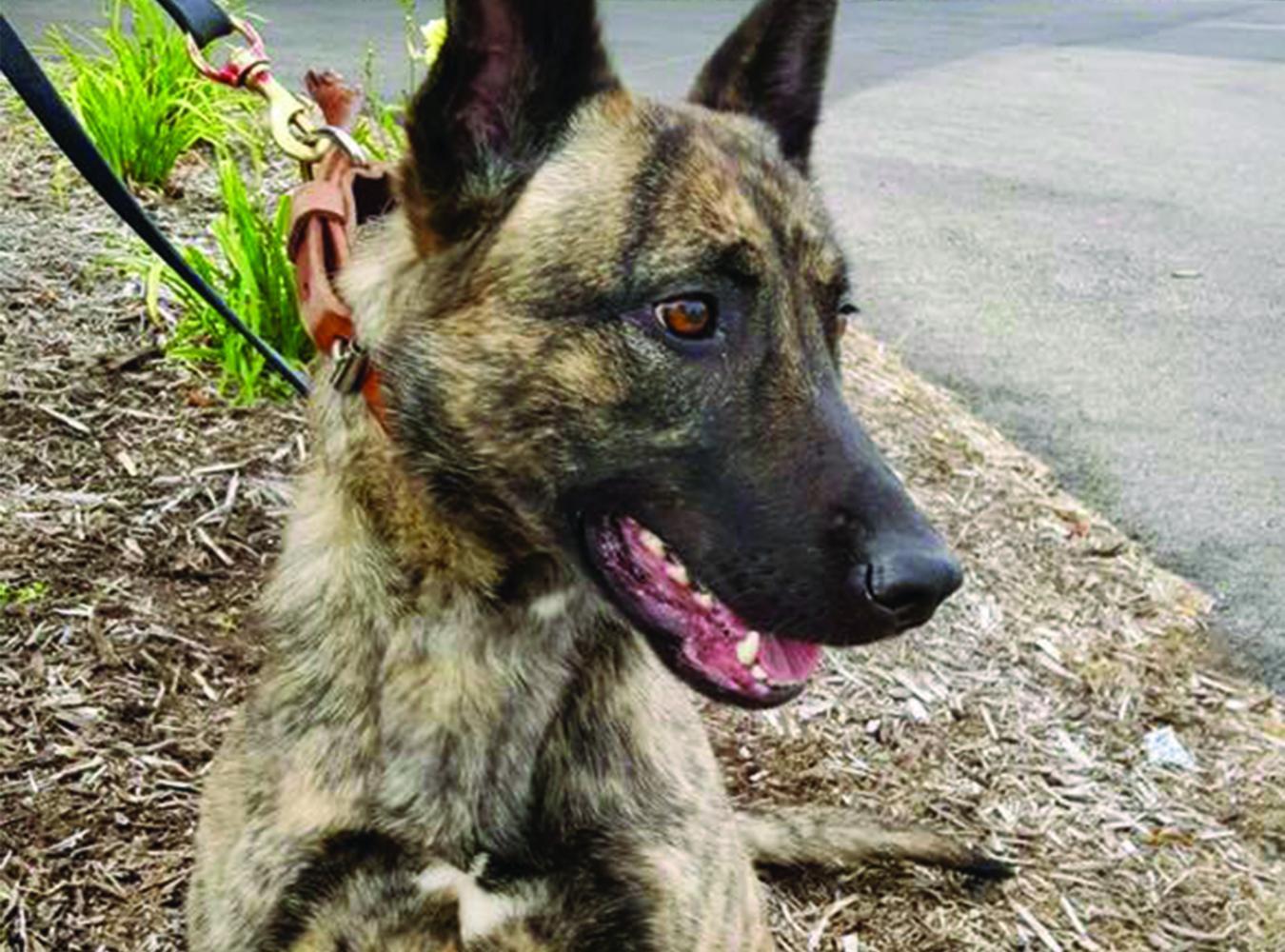 New police dog, Truus