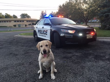3-year-old Ruso, the City of Whitewater's former police dog died of kidney problems in July after 14 months of service.
