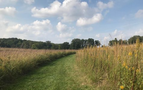 Choose your own path at the UW-Whitewater Nature Preserve north of campus on Schwager Dr.