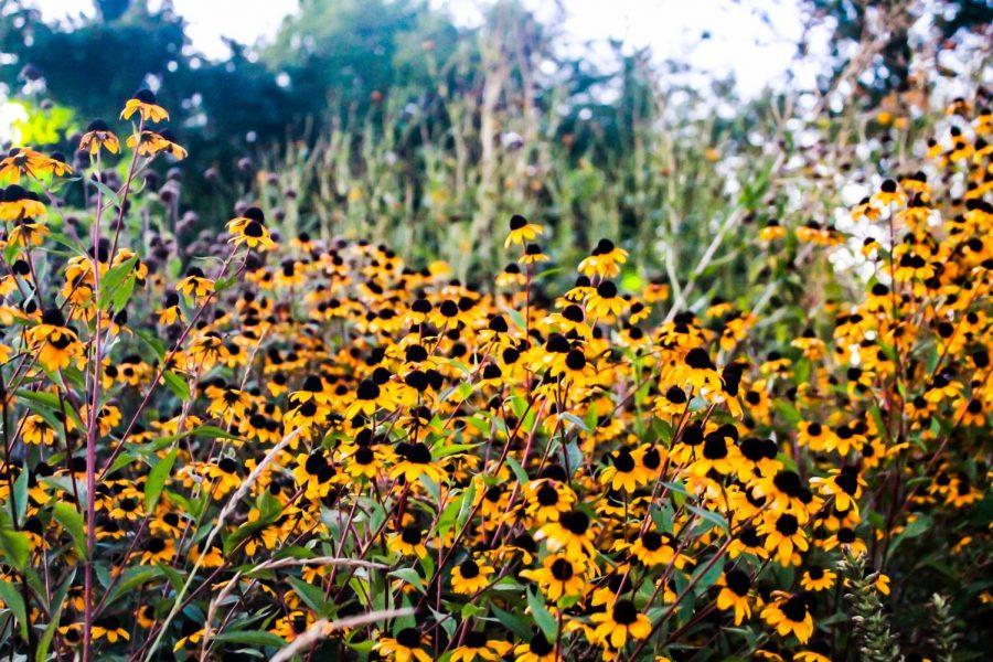 UW-Whitewater Campus Garden blooms