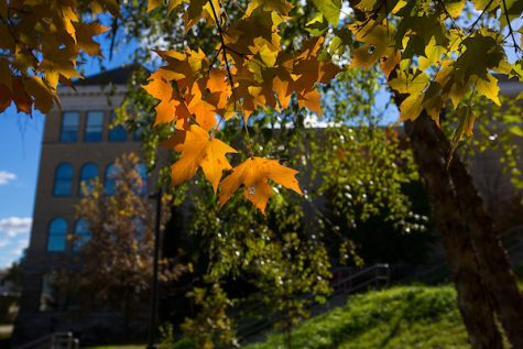 Maple leaves catch the afternoon sun outside Hyer Hall on the UW-Whitewater campus on Tuesday, Oct. 23, 2018. (UW-Whitewater photo/Craig Schreiner)