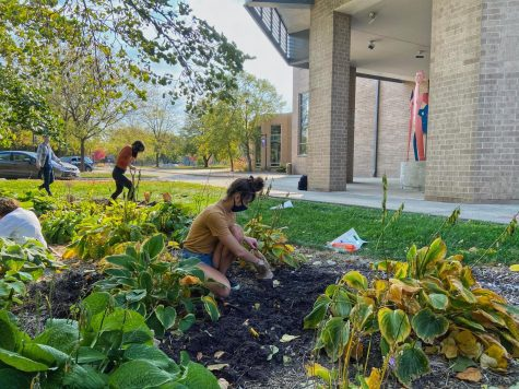 UW-Whitewater Active Minds partners with UW-Whitewater Sustainability to plant Tulip Bulbs in the Hope Garden, raising awareness for mental health issues.