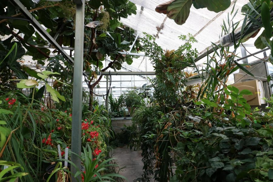 Flowers, vines, shrubs and more stretch from ceiling to floor in the Tropical Greenhouse of Upham Hall on the UW-Whitewater campus.
