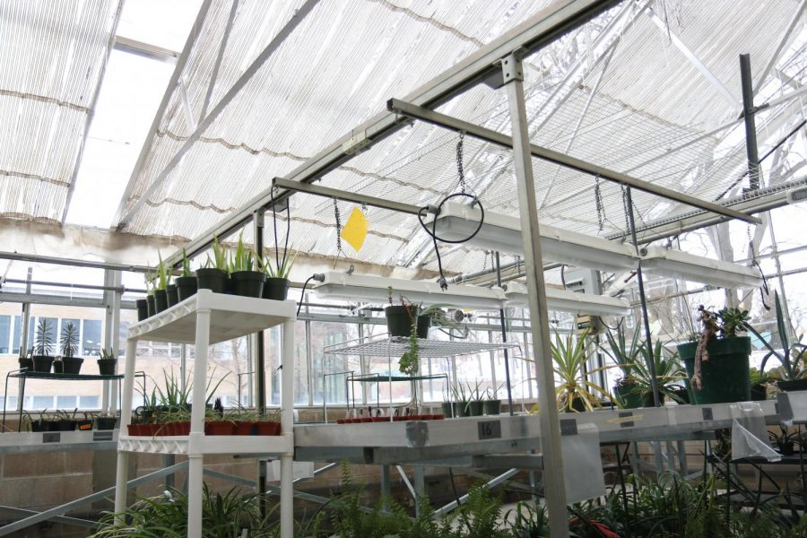 Upham greenhouse 1 located inside Upham Hall includes plants being grown for student research or organizations.