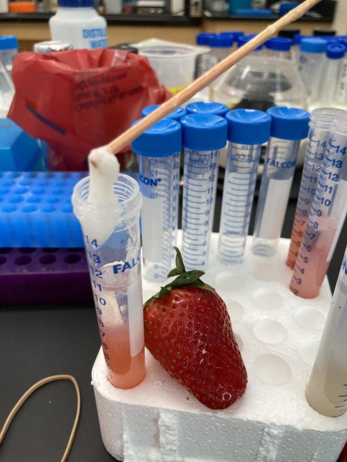 Kirsten Crossgrove's Feb. 27 STEM workshop had students isolate DNA from strawberries and bananas.