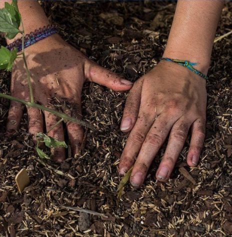 Growing Trees for the Earth to make a difference with the help of from UWW sustainability (Photo from UWW Sustainability Instagram page)