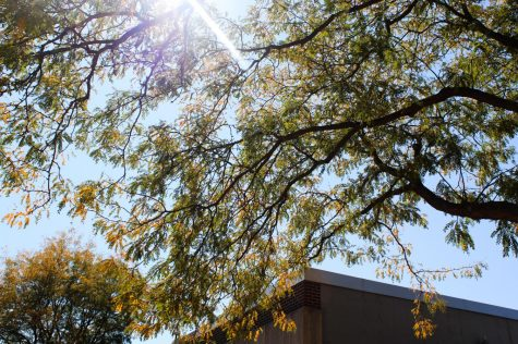 This tree with peeks of orange and yellow starting to show through is by Premier Bank in downtown Whitewater.